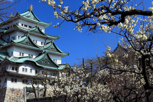 梅の名古屋城天守閣の写真素材 [FYI02671946]