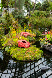 クラウドフォレストの池の写真素材 [FYI02671964]