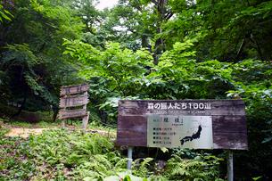 縁桂(森の巨人たち100選)の写真素材 [FYI02671969]