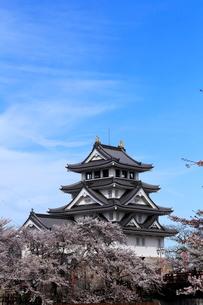 4月 桜の墨俣城-木下藤吉郎秀吉の一夜城ー の写真素材 [FYI02671977]