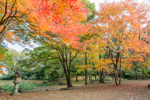 旧彦根藩松原下屋敷(お浜御殿)庭園の紅葉の写真素材 [FYI02672000]
