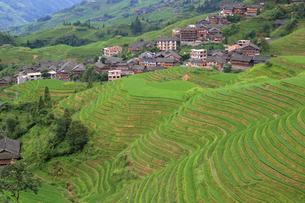 中国広西チワン族自治区龍脊の棚田の写真素材 [FYI02672005]