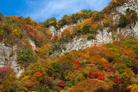 紅葉に彩られる香落溪・小太郎岩の写真素材 [FYI02672020]
