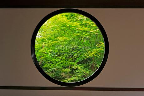 5月 新緑の源光庵 京都鷹ヶ峯の写真素材 [FYI02672038]