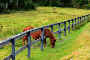 9月 秋の木曽馬の里の写真素材 [FYI02672045]