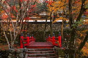 11月 紅葉の横蔵寺-美濃の正倉院-の写真素材 [FYI02672048]