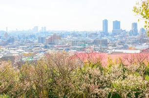 岡本梅林公園と阪神間の街並みの写真素材 [FYI02672051]