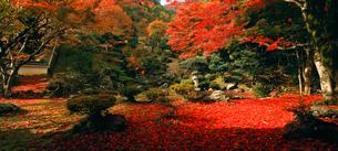 11月 紅葉の徳源院 滋賀の秋景色の写真素材 [FYI02672059]