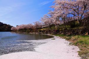 4月 桜の恵那峡の写真素材 [FYI02672060]