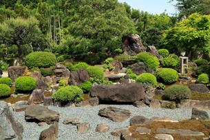 5月 ツツジの妙満寺 -春の京都-の写真素材 [FYI02672074]