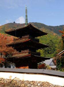 11月 紅葉の徳源院三重塔 滋賀の秋景色の写真素材 [FYI02672077]
