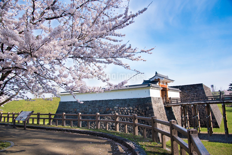 霞城公園一文字門と桜の写真素材 [FYI02672116]