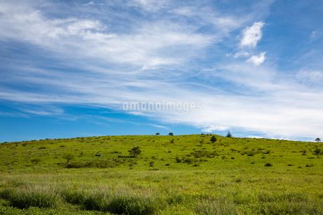 霧ヶ峰高原 南の耳を望むの写真素材 [FYI02672160]