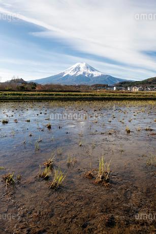 富士吉田市農村公園よりのぞむ収穫後の田んぼと富士山の写真素材 [FYI02672165]