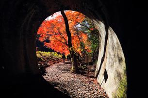 12月 紅葉の愛岐トンネル群 近代化産業遺産の写真素材 [FYI02672206]