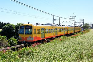 9月 三岐鉄道とそば畑の写真素材 [FYI02672235]