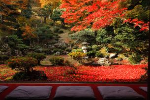 11月 紅葉の徳源院 滋賀の秋景色の写真素材 [FYI02672250]