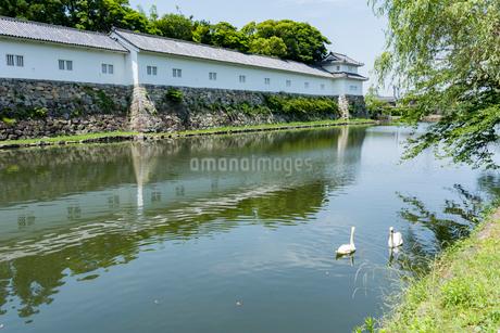 彦根城二の丸佐和口多聞櫓 堀と白鳥の写真素材 [FYI02672260]