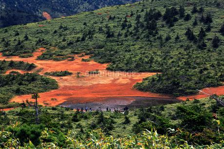 10月 秋の田茂萢湿原の写真素材 [FYI02672307]