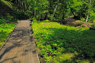 6月 ノンノの森  北海道セラピーの森の写真素材 [FYI02672314]