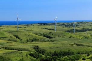 夏の宗谷丘陵風力発電と周氷河地形の写真素材 [FYI02672315]