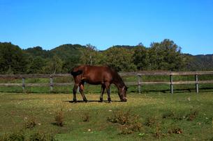 10月 秋の木曽馬の里の写真素材 [FYI02672316]