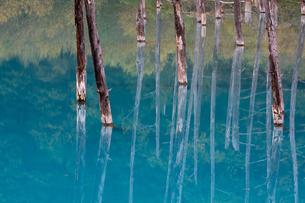 青い池に映る枯木林 北海道美瑛町の写真素材 [FYI02672340]
