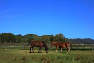 10月 秋の木曽馬の里の写真素材 [FYI02672341]