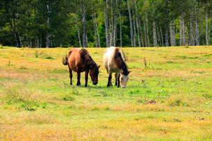 9月 秋の木曽馬の里の写真素材 [FYI02672352]