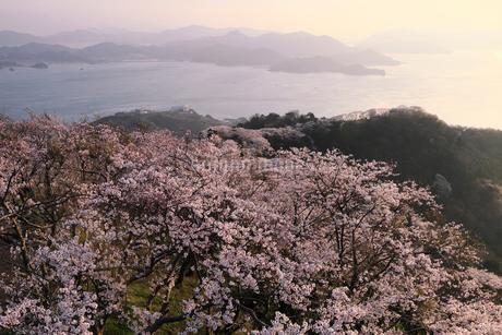 4月春,桜の積善山-しまなみ海道の桜名所-の写真素材 [FYI02672353]