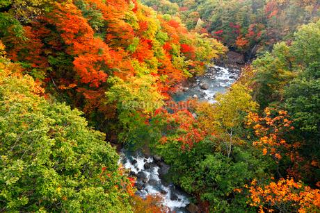10月 紅葉の八幡平 森ノ大橋からの展望の写真素材 [FYI02672379]