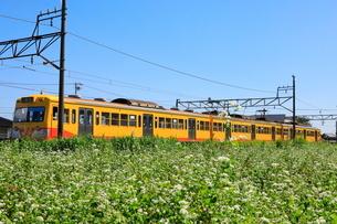 9月 三岐鉄道とそば畑の写真素材 [FYI02672407]