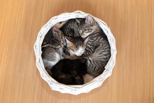 カゴの中で眠る仔猫の写真素材 [FYI02672424]
