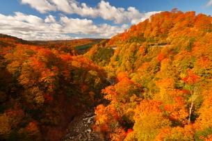 10月 新玉川温泉界隈から展望した紅葉風景の写真素材 [FYI02672450]