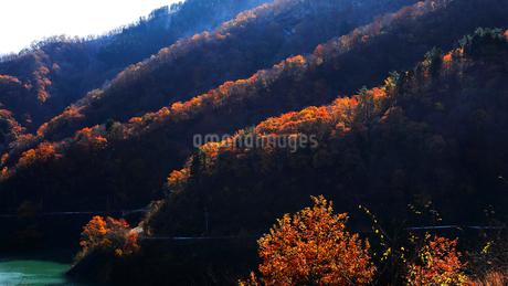 11月 紅葉と雪景色の徳山ダムの写真素材 [FYI02672458]