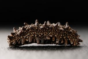 横から見た乾燥ナマコの写真素材 [FYI02672482]