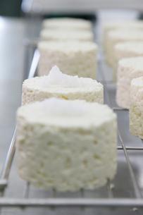 カマンベールチーズを作る工程写真の写真素材 [FYI02672483]