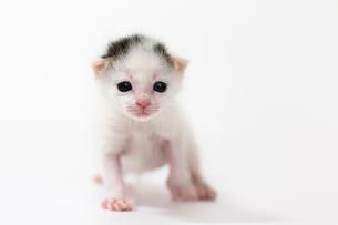 生後2週間の子猫の写真素材 [FYI02672551]