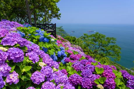 アジサイ咲く桃源郷岬の写真素材 [FYI02672568]