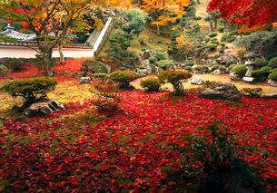 11月 紅葉の徳源院 近江の秋の写真素材 [FYI02672577]