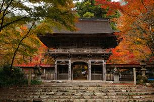 11月 紅葉の大矢田(おやだ)神社 -美濃の天然記念物-の写真素材 [FYI02672578]