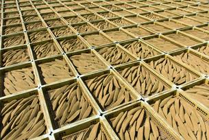 鰹節の天日干しの写真素材 [FYI02672587]