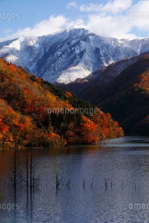 11月 紅葉と雪景色の徳山ダムの写真素材 [FYI02672617]
