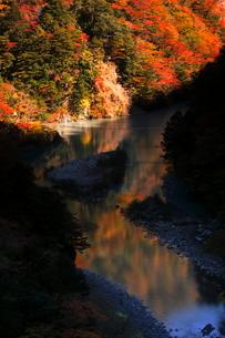 11月 夢の吊橋 紅葉の寸又峡の写真素材 [FYI02672621]