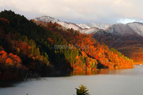 11月 紅葉と雪景色の徳山ダムの写真素材 [FYI02672712]