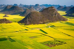 菜の花満開の羅平(中国雲南省)の写真素材 [FYI02672741]