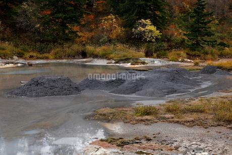 10月 後生掛温泉の自然研究路の写真素材 [FYI02672745]