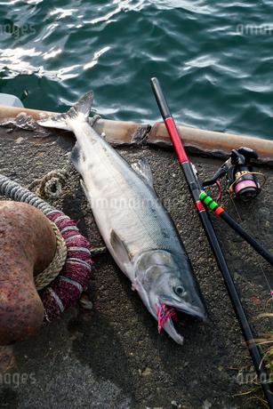 鮭釣りのイメージ写真の写真素材 [FYI02672753]