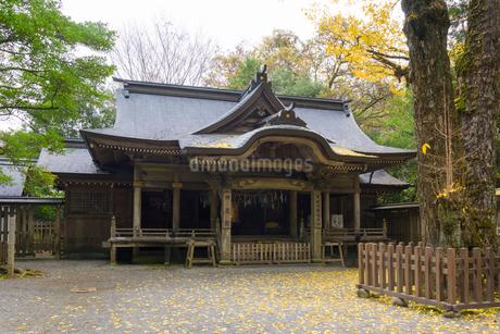 秋の天岩戸神社 西本宮 神楽殿の写真素材 [FYI02672774]