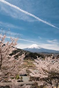 背戸山より望む桜と富士山の写真素材 [FYI02672792]